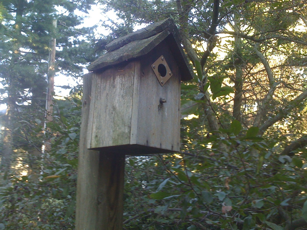 Bird House from Greg Robinson - Sadler Garden Collections