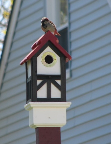 Testimonial: A Red Roofed Tudor Birdhouse and Its Resident Bird
