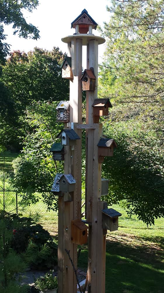 A Tiverton: The Crowning Glory of a Bird Condo